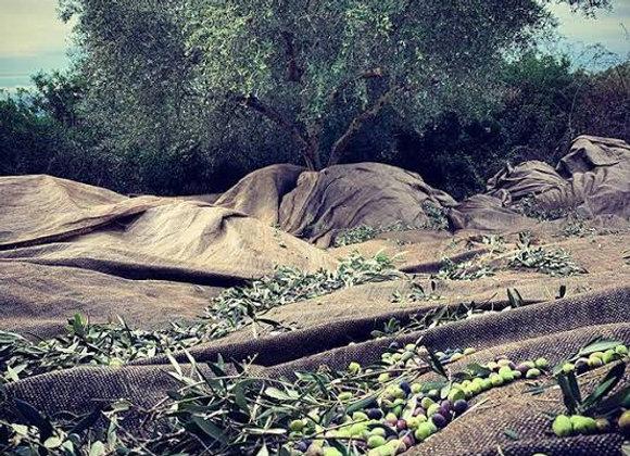 Olive Oil Extra Virgin Trifilia Supreme