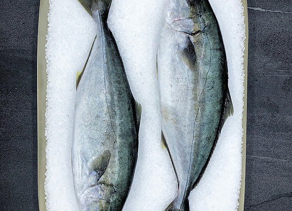 Geraldton Australian Kingfish Whole Cleaned FRESH