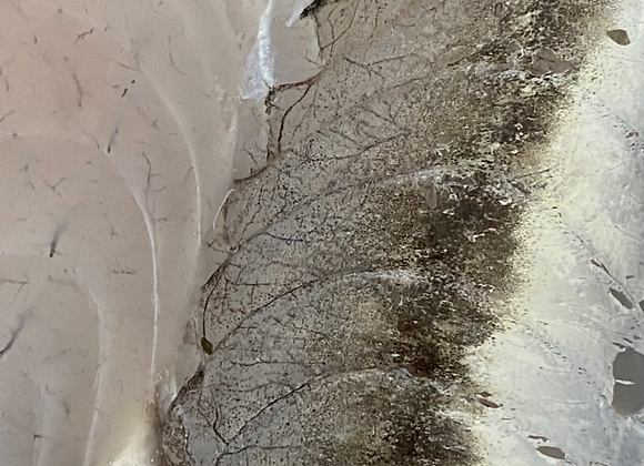 Victorian Rock Flathead Fillets FRESH