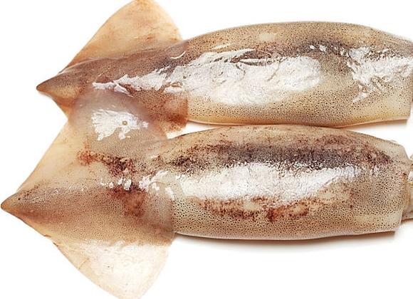 Australian Arrow Squid Whole FRESH