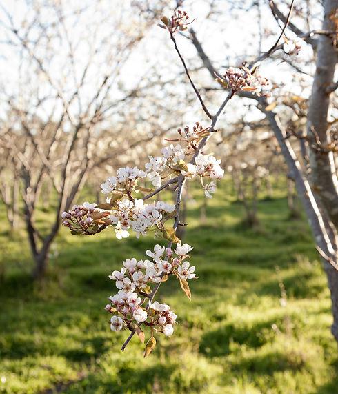 149 - Blossom.jpg
