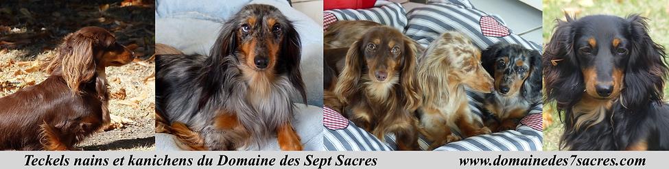 Les minis chiens des Sept Sacres