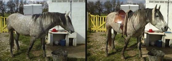 Verbeter je paard, begin bij jezelf