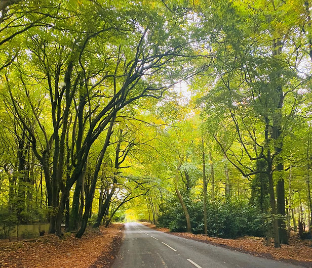 Road%20pic%202_edited.jpg