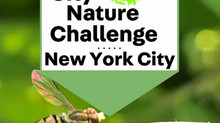 4/30 City Nature Challenge