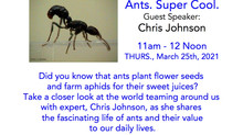11am 3/25 Ants. Super Cool. Guest speaker Chris Johnson