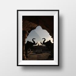 elephants of phuket