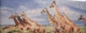 kenia safari rainbow.jpg