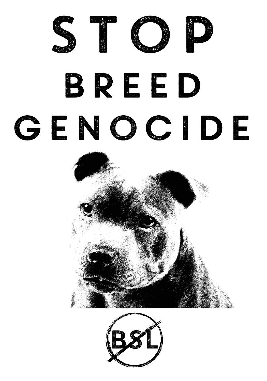 Staff Bull terrier Tee Shirt designs_edited