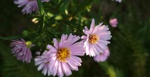 """Plantes """"coup de coeur"""" pour un jardin sans arrosage"""