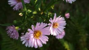 Des plantes pour un jardin sans arrosage