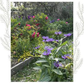 Fleurs de saison... les petits plaisirs de la vie !