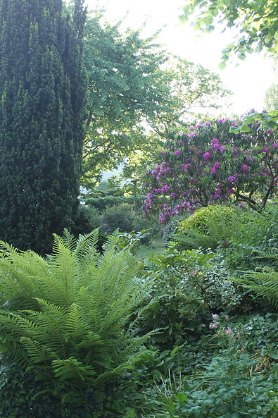 Jungle végétale du jardin d'agrément