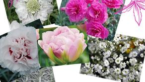 Nouveau projet : création d'un jardin bouquetier