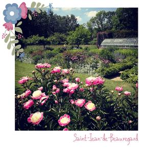 Des roses sélectionnées, créées pour leurs qualités gustatives... Miam !