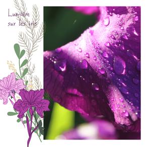 Comment j'ai appris à chérir les iris...