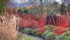 Le jardin en hiver… il y a quoi à voir ?