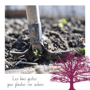 Plantations de vos arbres : les bons gestes à adopter
