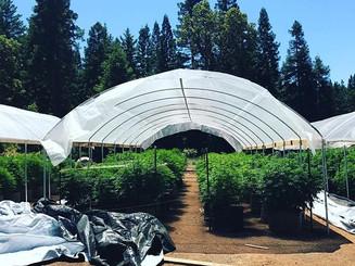 Emerald Mountain Farm
