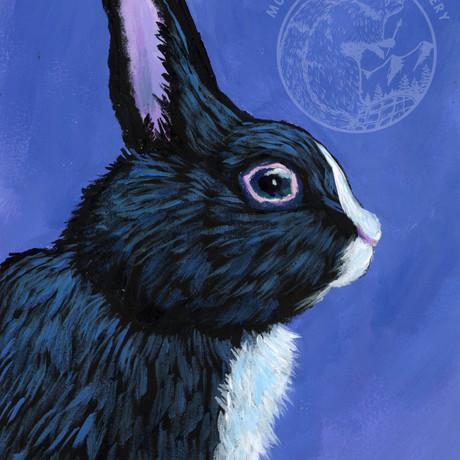 Rabbit on Violet