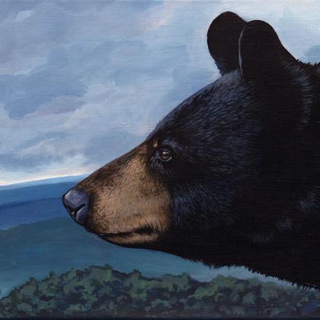 Appalachian Bear