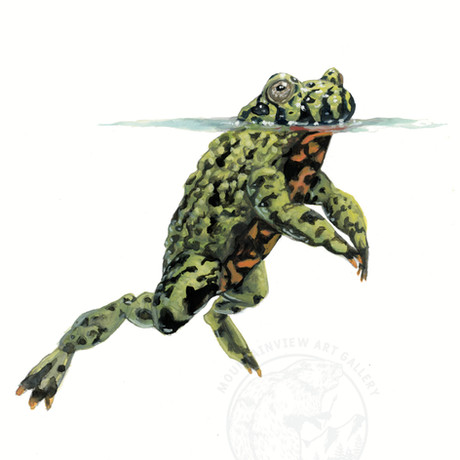 Floating Fire Bellied Toad