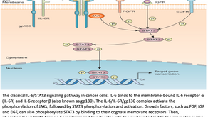 STAT 3: EYE CATCHER FOR DRUG RESISTANCE CANCER THERAPEUTICS