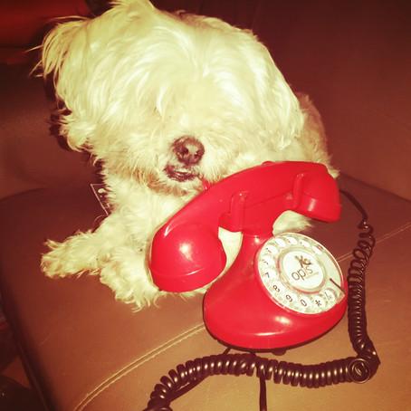 L'essentiel à savoir avant de demander une communication animale