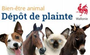 Vous êtes témoin de maltraitance animale, que pouvez-vous faire ?