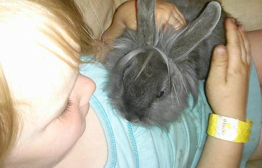 Bienfais du Reiki animalier sur un lapin qui ne se nourrissait plus.