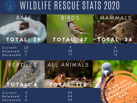 Happy New Year - A Review of Wildlife Rescued in 2020