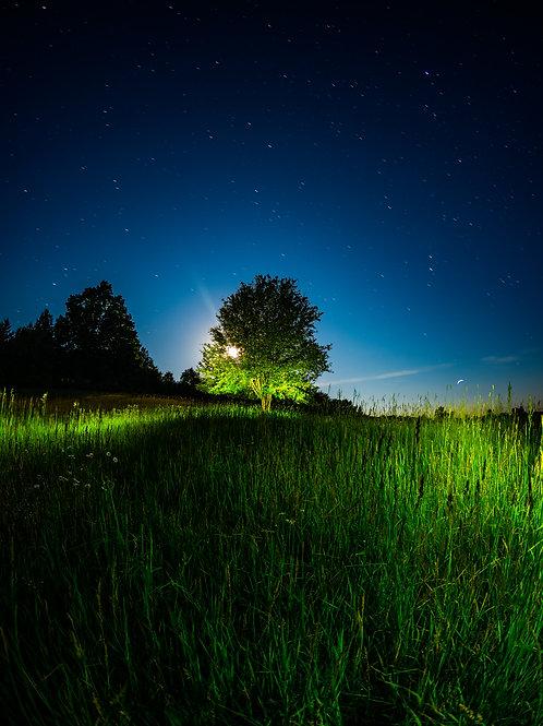 [Walden] Sole Tree in The Walden Hills