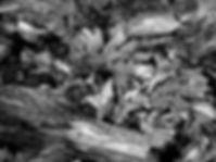 P1011616 b&w.jpg