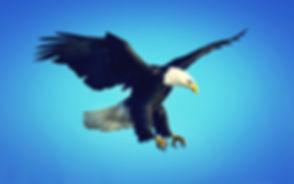 eagle-1080p_edited.jpg