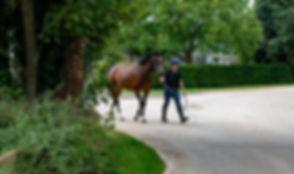 Golden Horse Syn_4725.jpg