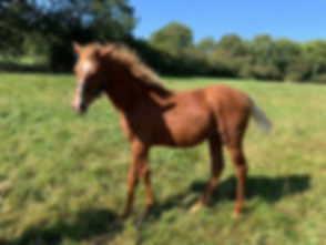 Pro-Foal.jpg