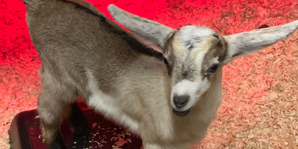 You've GOAT to help Second Harvest of the Mahoning Valley!