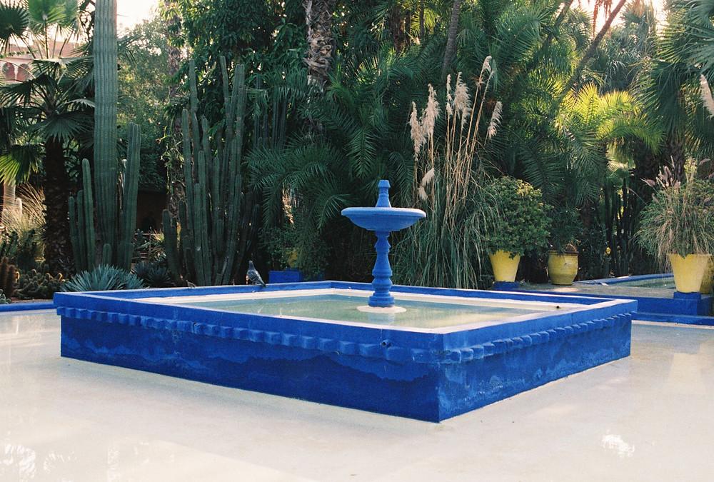 Studio Joko visits Jardin Majorelle in Marrakech, Morocco. Gardens by French artist Jacques Majorelle.
