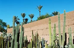 joko visits musee de la palmaraie marrakech morroco-analog6