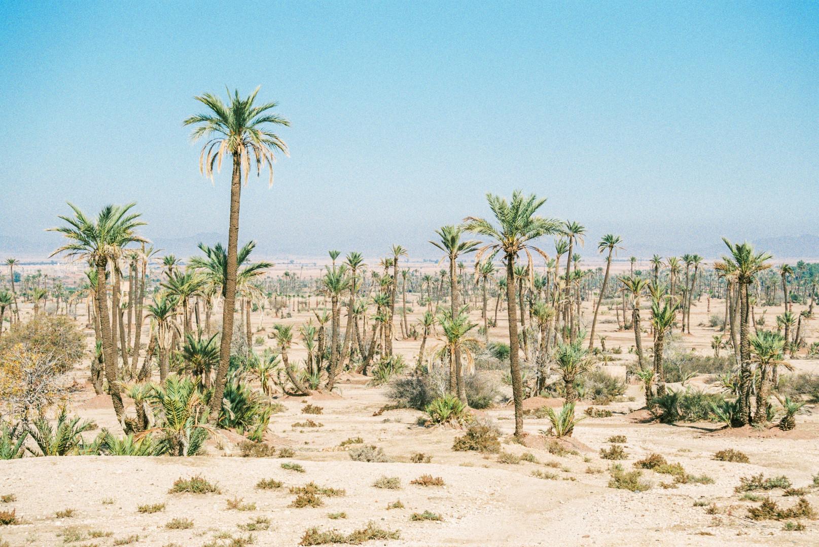 Vivid fragments of Morocco - La Palmerai