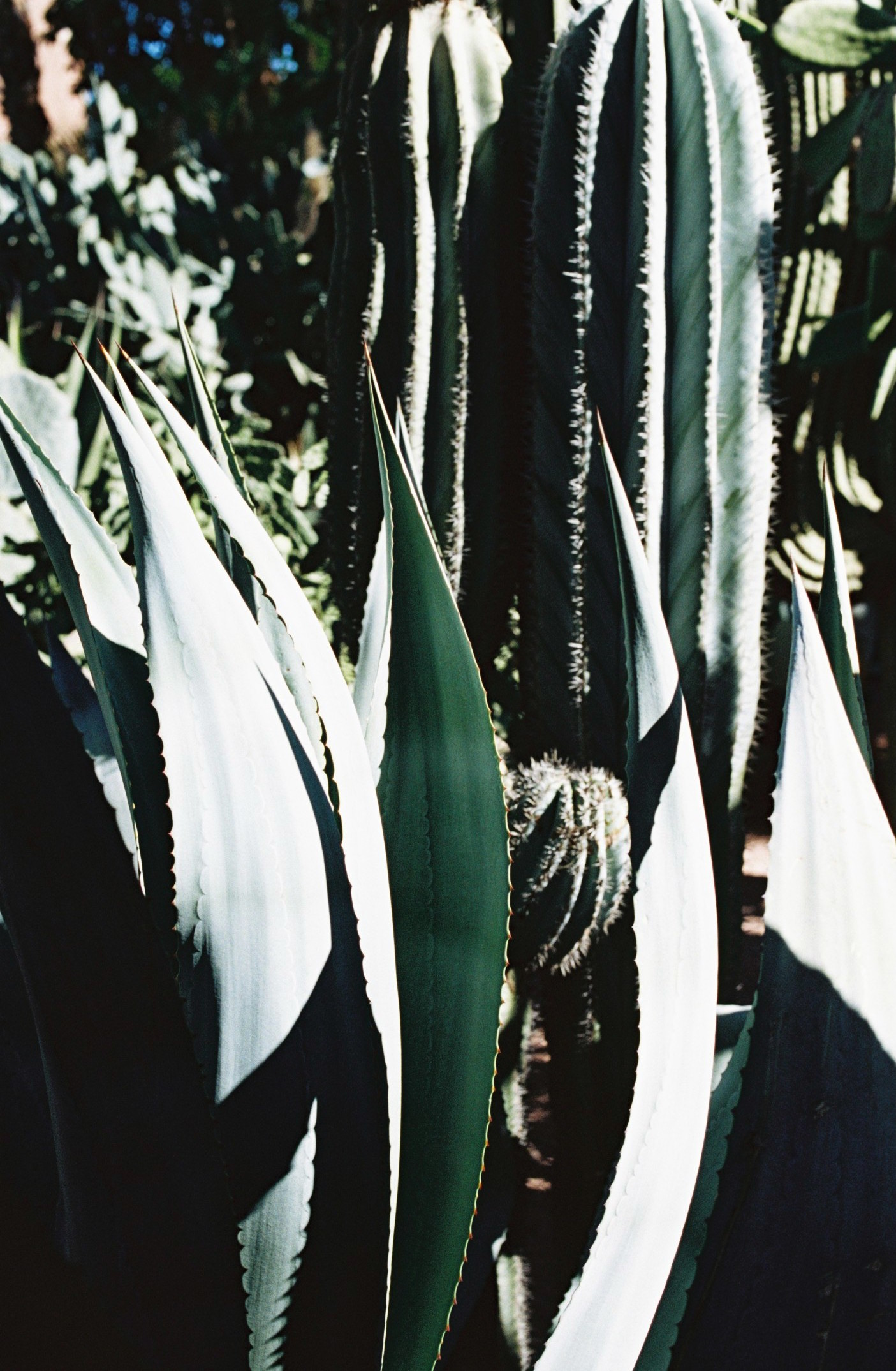 joko visits jardin majorelle Yves Saint Laurent Marrakech Marocco-4analog