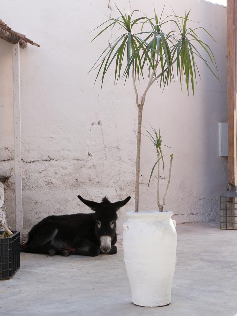 joko visits la ferme medina marrakech mo