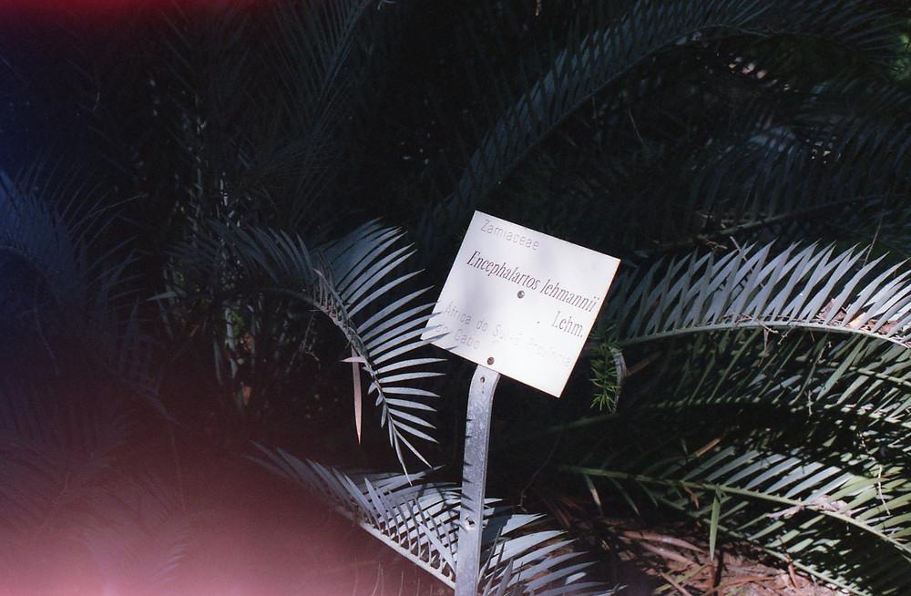 Joko visits Tropical Botanical garden in Lisbon, Portugal.