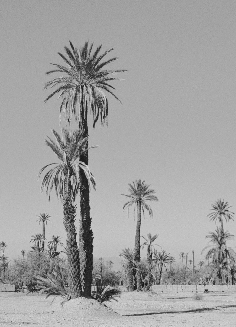 Poética natura - Misc Monochrome 1 - De