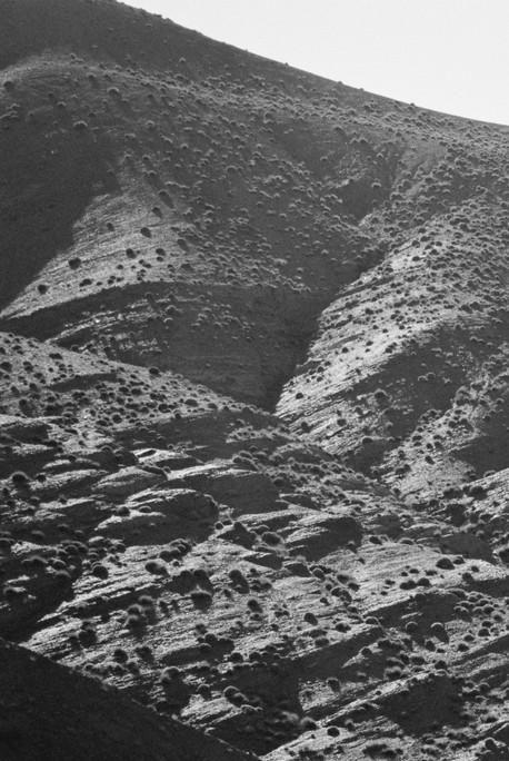 Poética natura - Misc Monochrome 11 - D