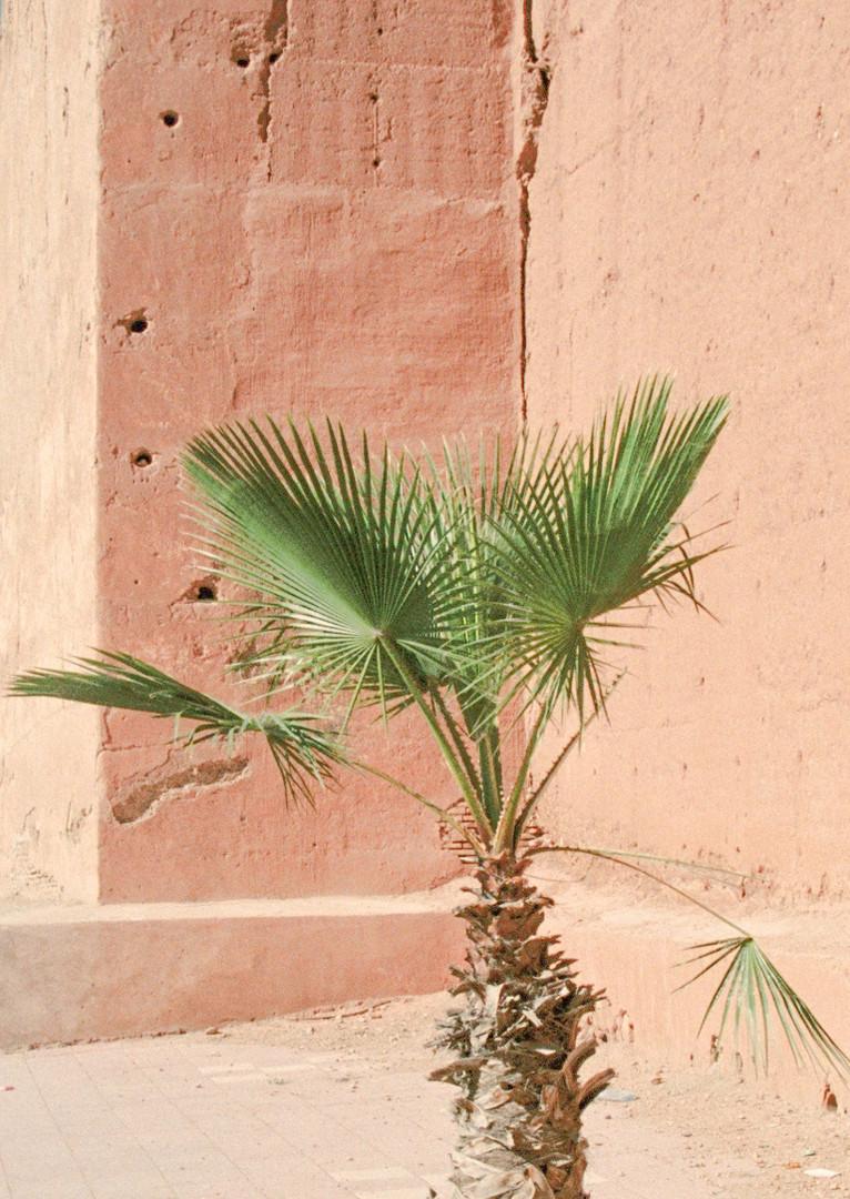 Vivid fragments of Morocco - Taroudant 2