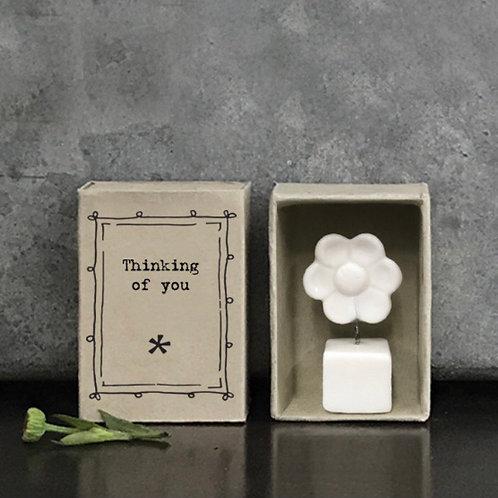 East of India matchbox flower