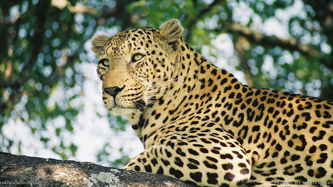 Leopards Never Change Their Spots ...