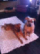 Yuki and Pongo 1.jpg