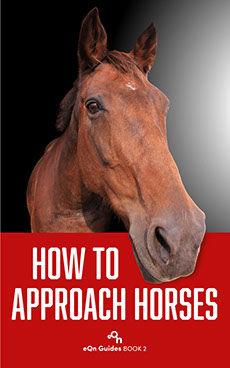 eqn_02_how to approach horses@1x.jpg